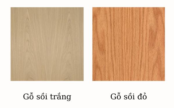 Phân loại gỗ sồi